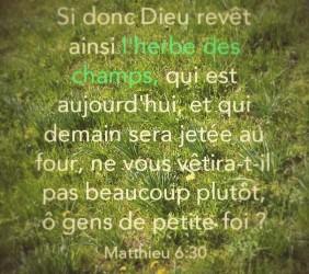 Matthieu 6:30