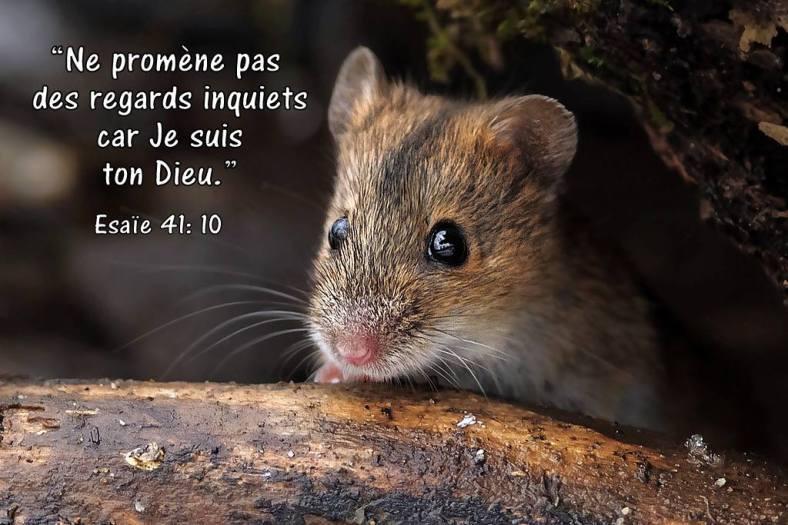 Esaïe 41:10