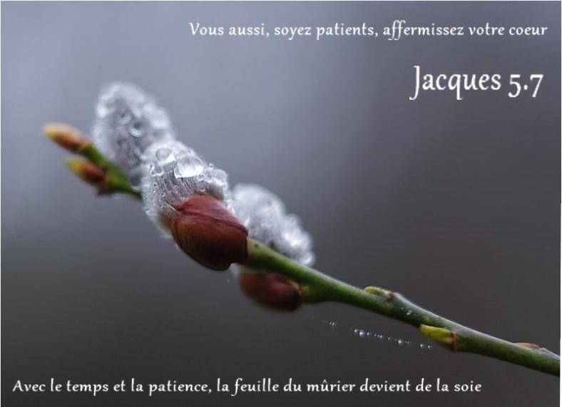 Jacques 5:7