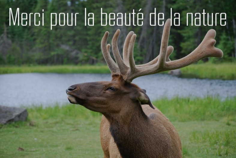 Citation Merci pour la nature