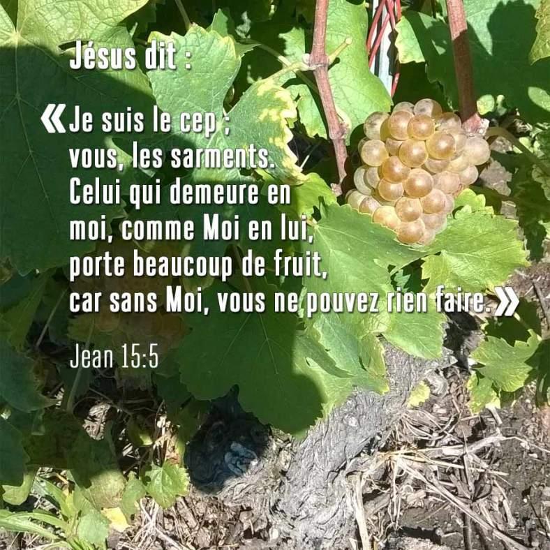 Jean15_5