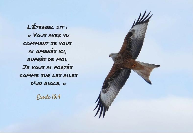 Exode 19:4