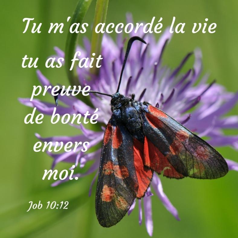 Job 10:12