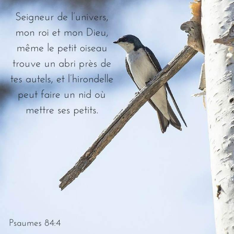 Psaume 84:4